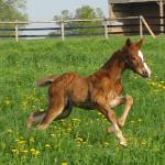 http://www.sunnydayshanoverians.com/qarnivale-quaterback-sps-don-bosco-sps-prince-orac-xx-may-10-2011/