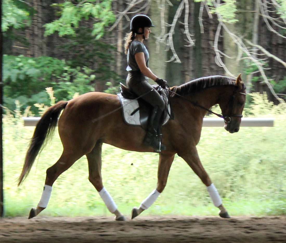Soft Trot Sept6