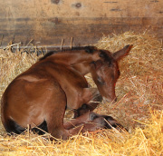 Dilly naps 2 hours old