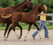 Show trot