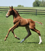 Canter 1 week old
